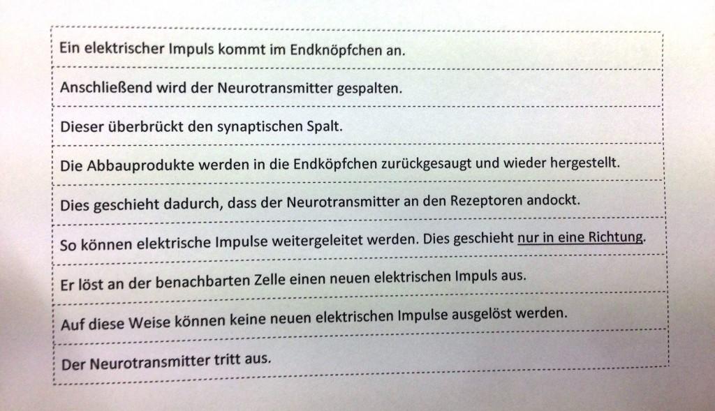 Legespiel_Weiterleitung elektrischer Impulse über eine Nervenzelle