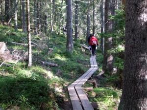 """""""Autobahn"""" durch den Nationalpark Skuleskogen"""